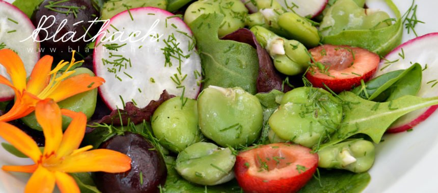Fava Bean Salad with Cherries and Radishes